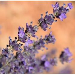 Eau Florale de Lavande Bio...